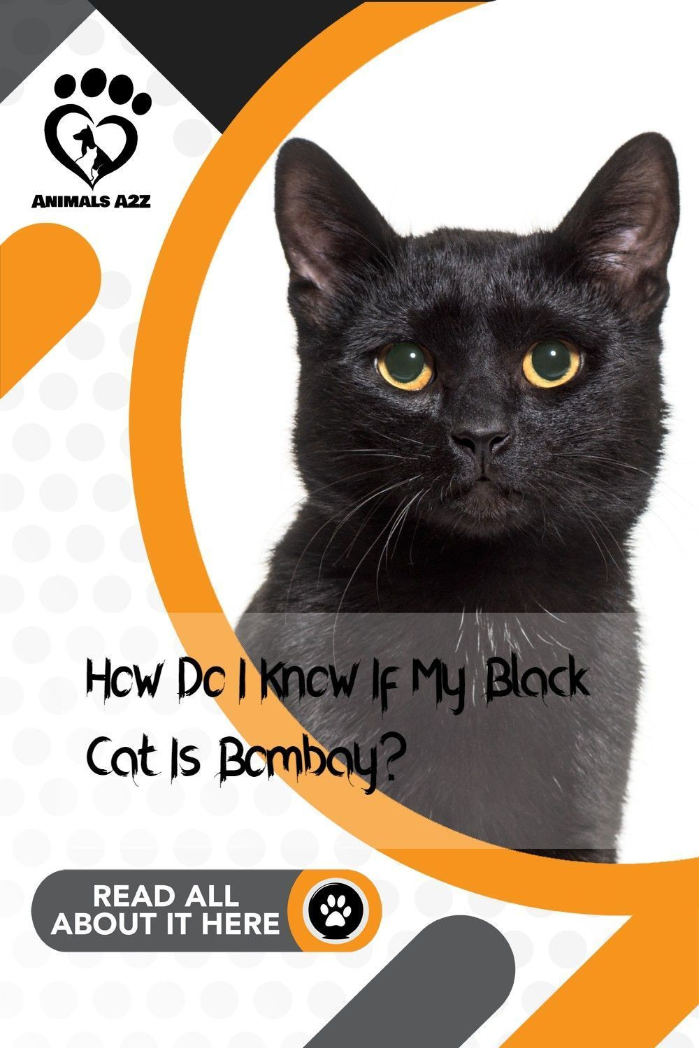 Are all black cats bombay cats cat facts in 2020 cat