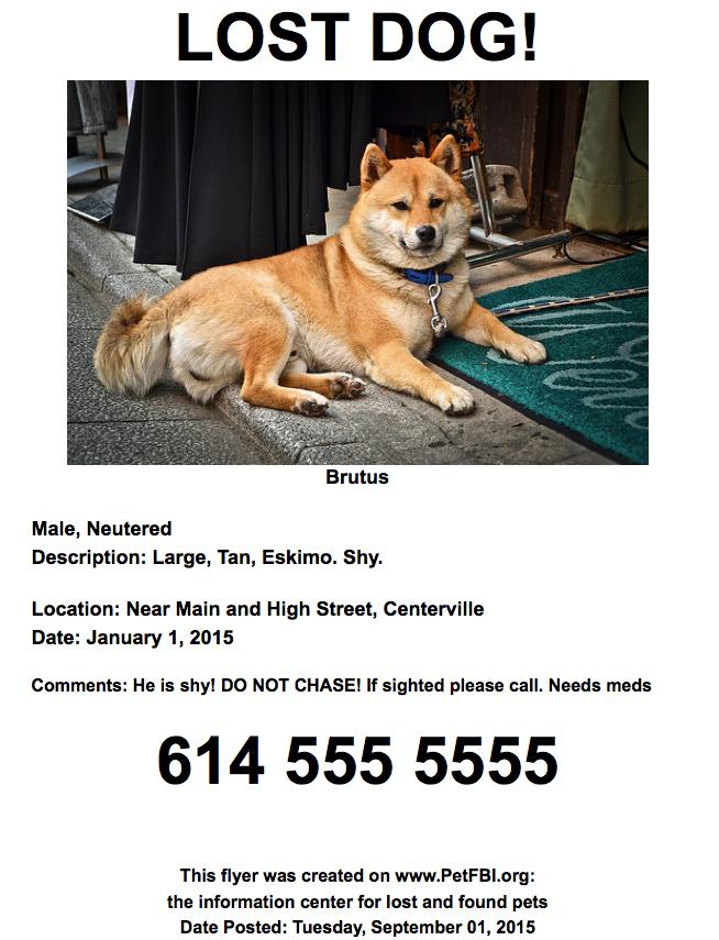 Lost dog action plan | Dog care resources | Pinterest | Volunteer ...
