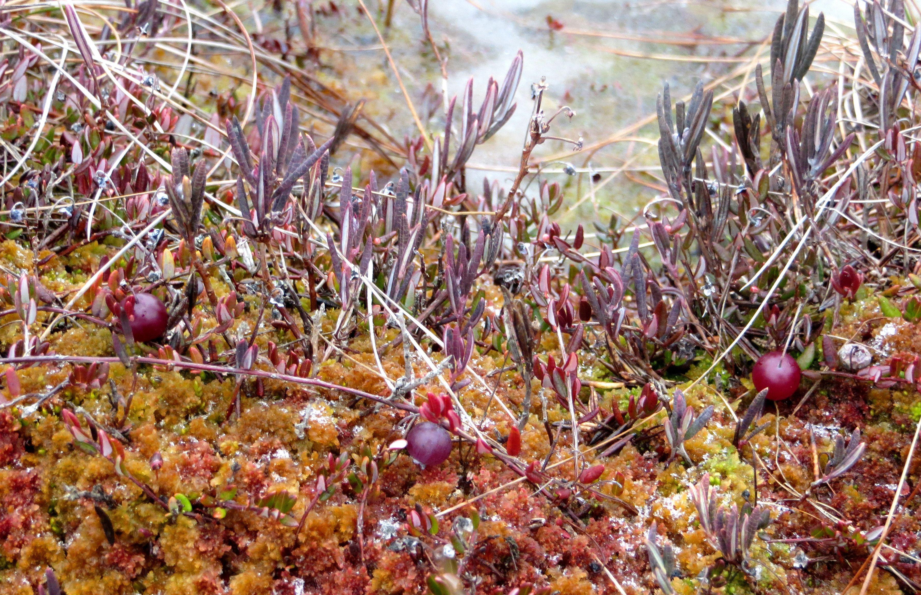 Lähde retkelle Torronsuolle!  #torronsuo #kansallispuisto #nationalpark #suoluonto #erärenki #tammela