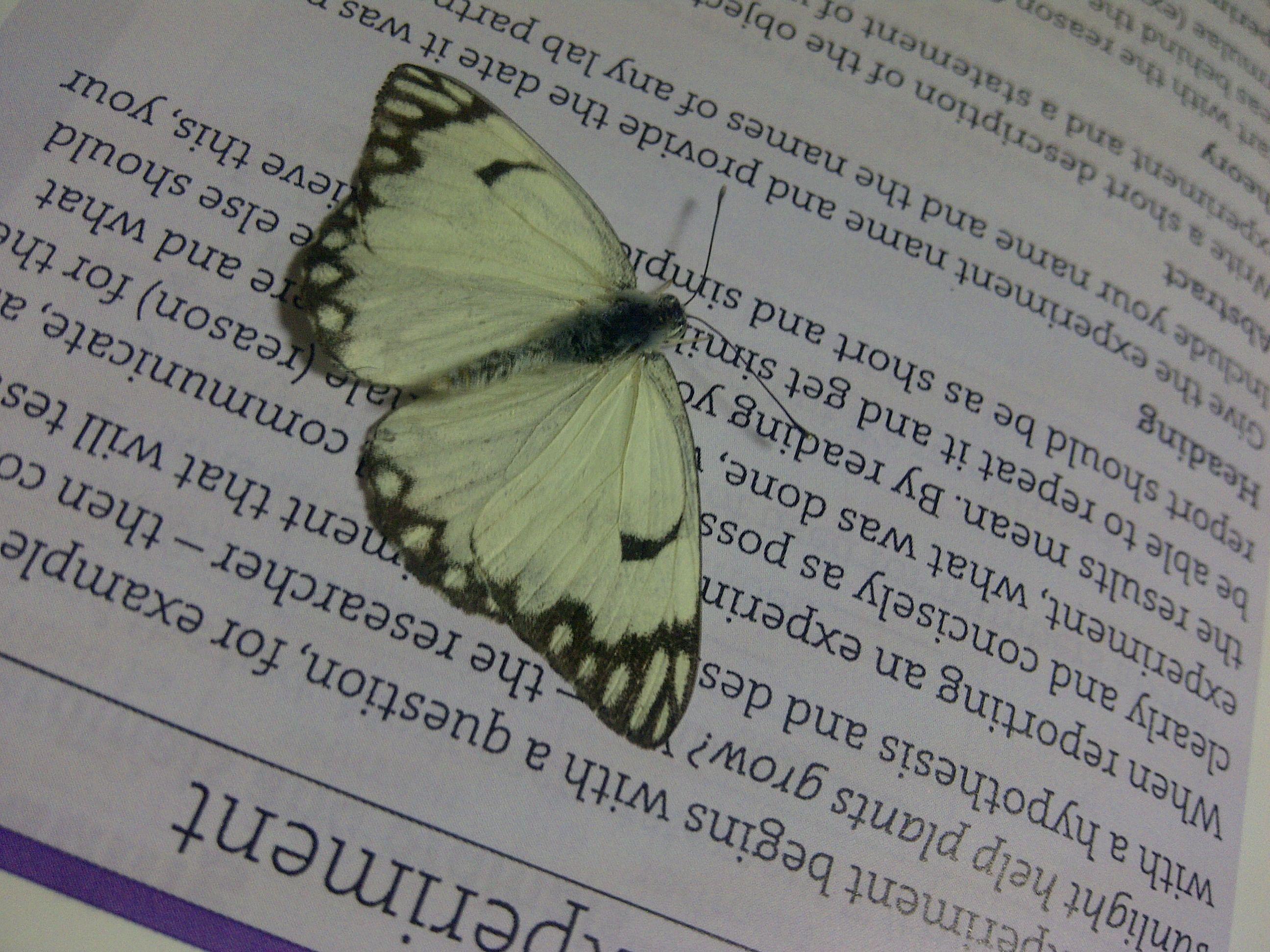 أحد أشكال أبي دقيق Rhopolocera صولجانيات القرون Style Inspiration Tri Butterfly
