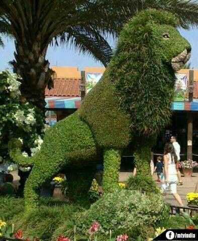 Home Decor Ideas | Things I like | Pinterest | Topiary, Gardens and