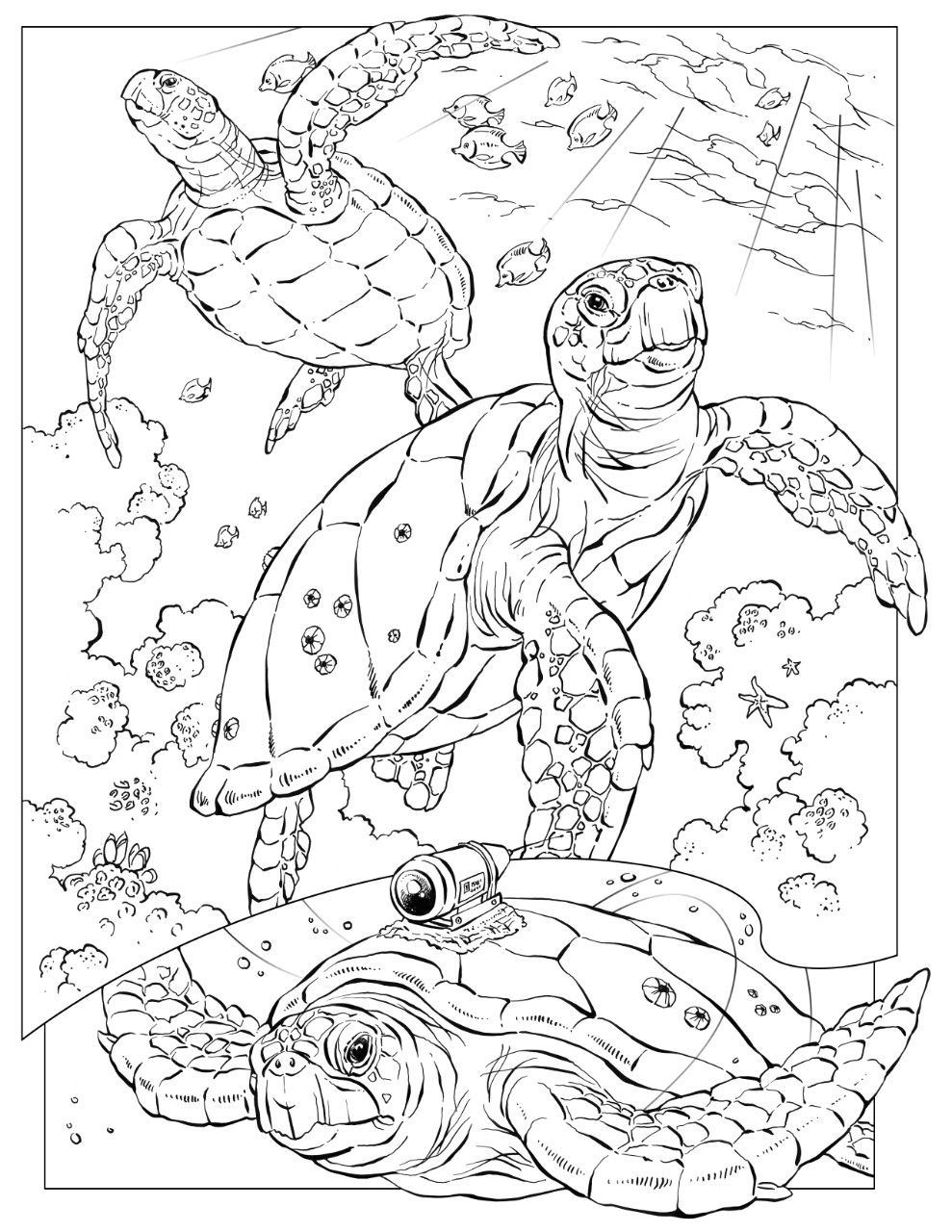 Coloring Book Animals J To Z Turtle Coloring Pages Ocean