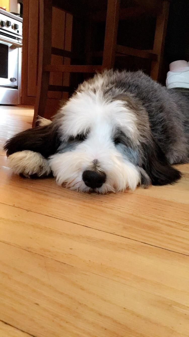Long day playing outside... http://ift.tt/2rBXiG1