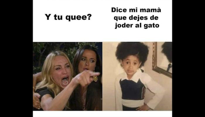 Meme Del Gato Blanco En La Mesa Origen