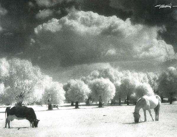"""fot. Edward Hartwig, """"Łąka"""", 1986 r, cena wywoławcza 2500 zł, cena uzyskana 2500 zł"""