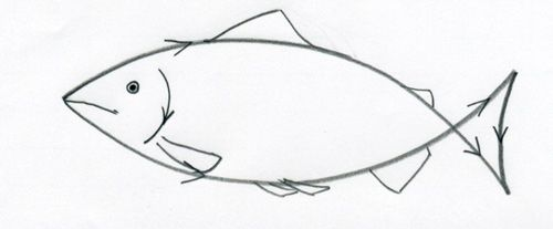 How To Draw A Fish04 Jpg 500 207 Pixels Fish Drawings Drawings Animal Drawings