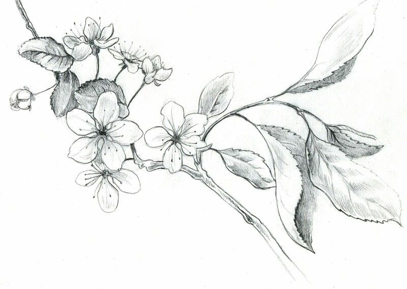 распускающийся цветок картинки карандашом адриана меняет