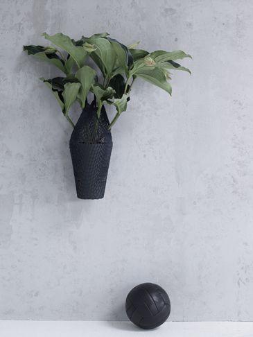 Zimmerpflanzen Produktion Maria Grossmann Plants By Jessica Sinta