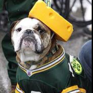 Cheesehead Even For The Dog Nfl Packers Football