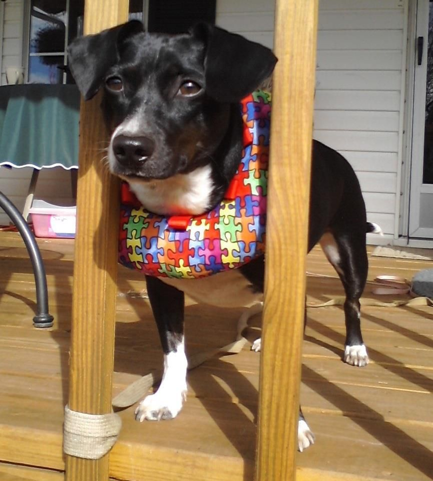 puppy bumpers keep your dog safe from slipping through fences and