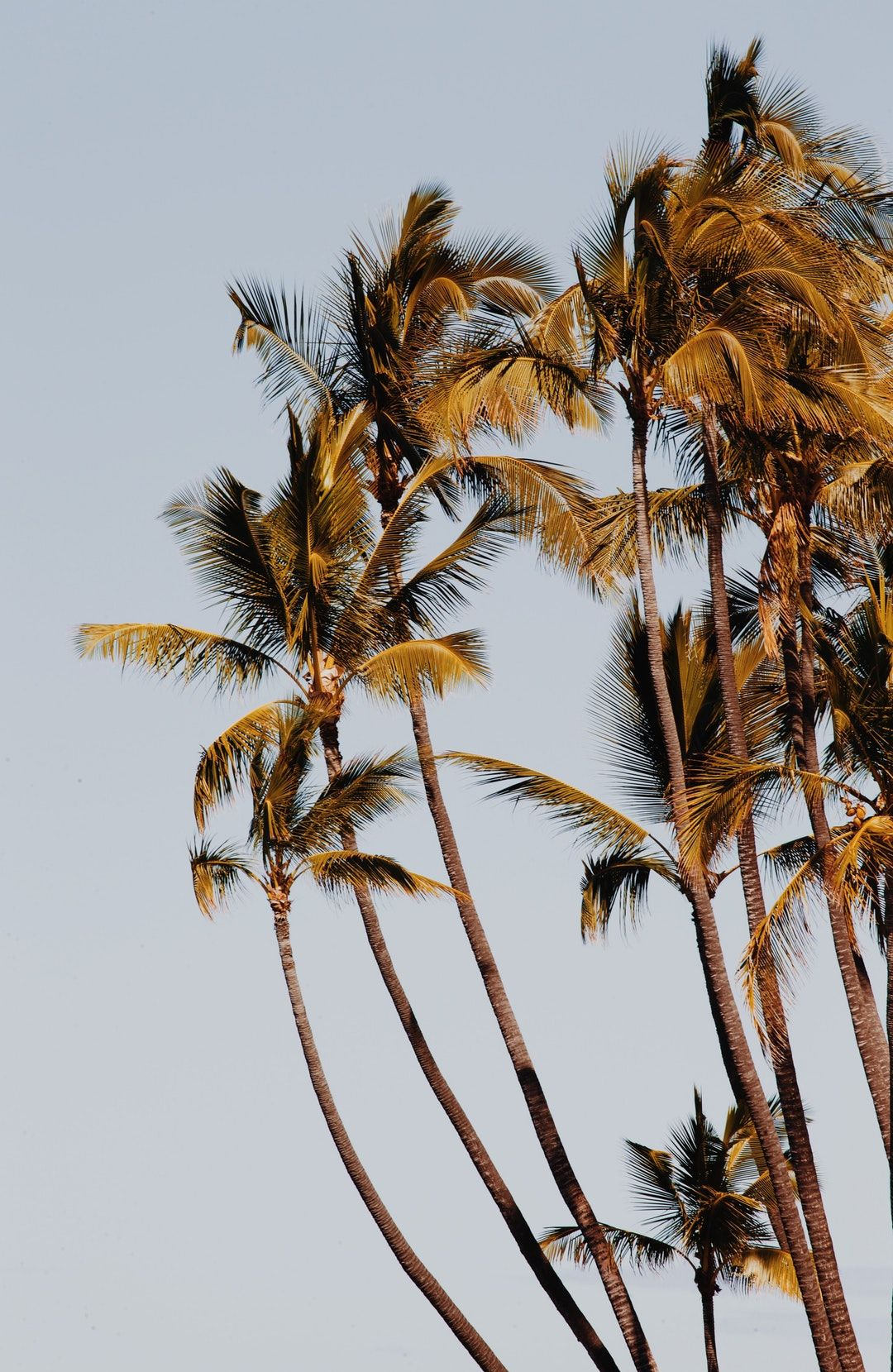 Run Amok Amuck In 2020 Pictures Pictures Images Palm Trees