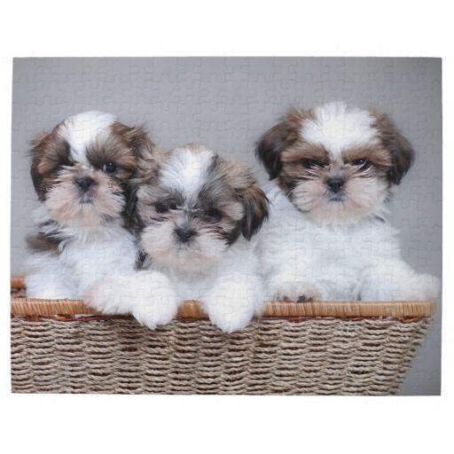 Shih Tzu Puppies Jigsaw Puzzle Zazzle Com In 2020 Shih Tzu Puppy Low Energy Dogs Shih Tzu