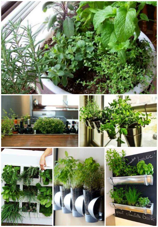 inside plants easy to grow - 550×786