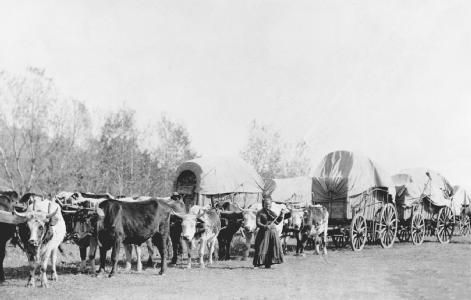 The Pioneers Traveled In Groups Of Wagons Known As Wagon Trains