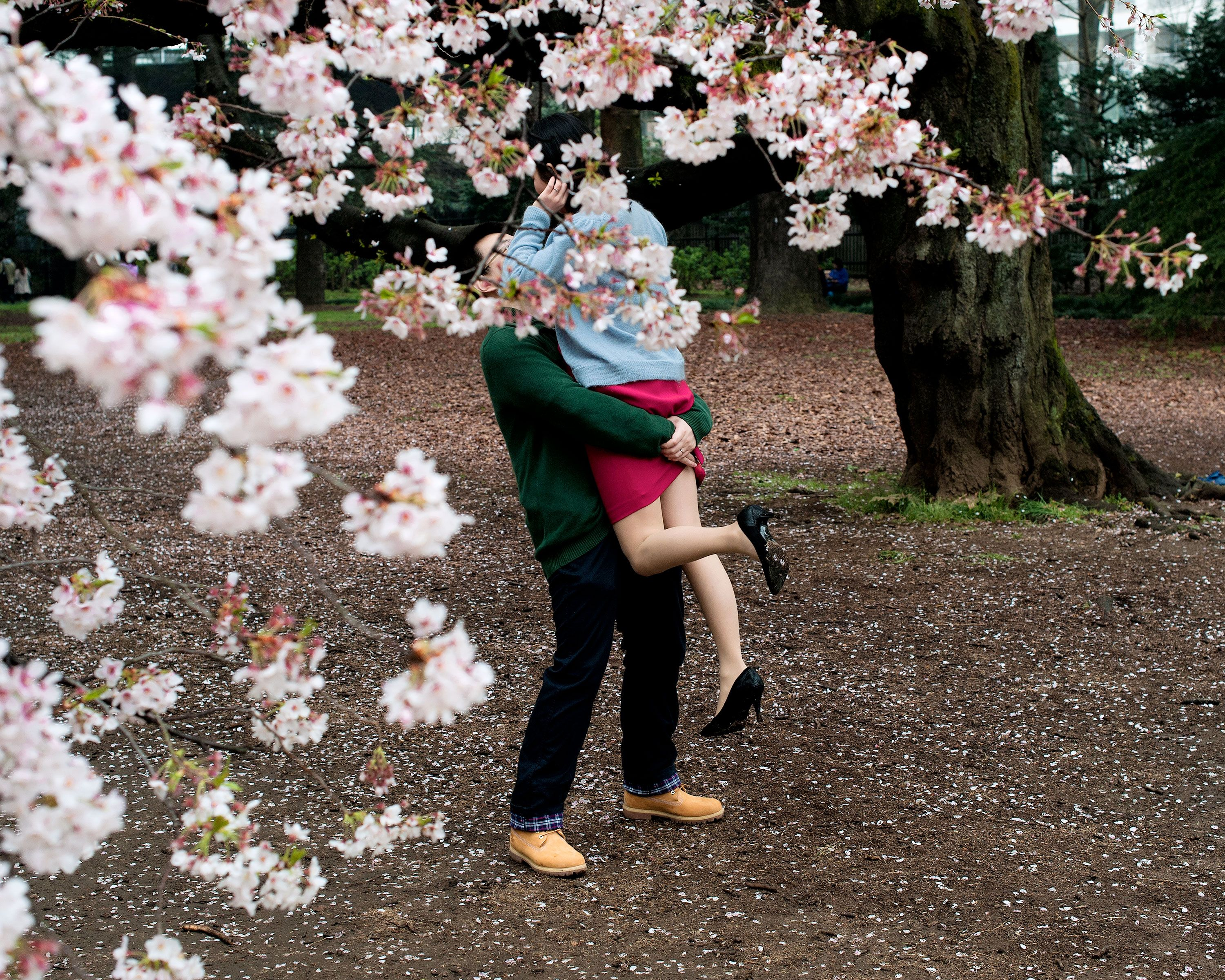 Embrace Spring With Pictures Of Japan S Cherry Blossoms Japan Cherry Blossom Festival Japan Cherry Blossom