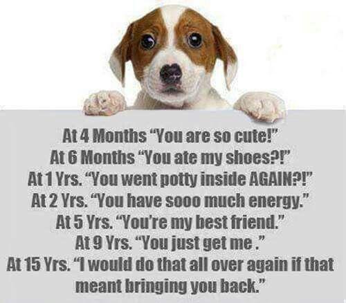 Pet Loss Dog Quotes Pet Remembrance Pet Loss Grief