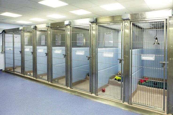 Choosing the Right Dog Boarding Facility for Your Pet