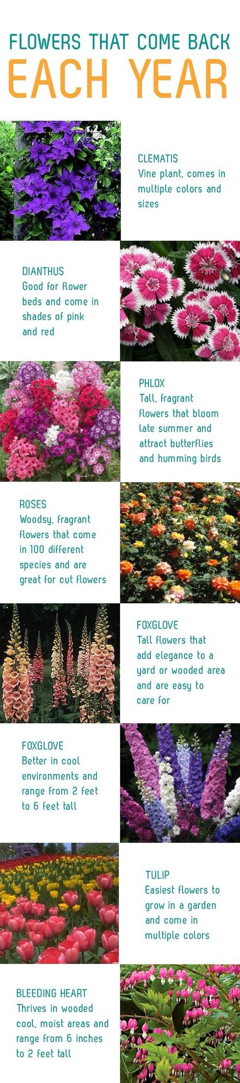 Flowers That Come Back Every Year Plants Planting Flowers Flower Beds