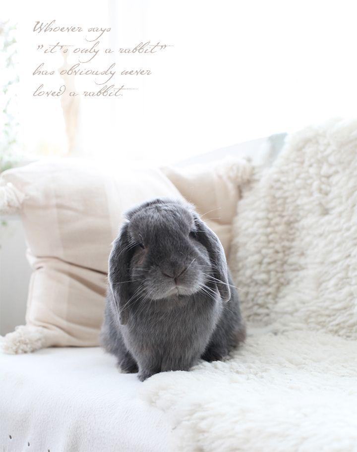 c u t i e s kaninchen s e tiere und kaninchengehege. Black Bedroom Furniture Sets. Home Design Ideas