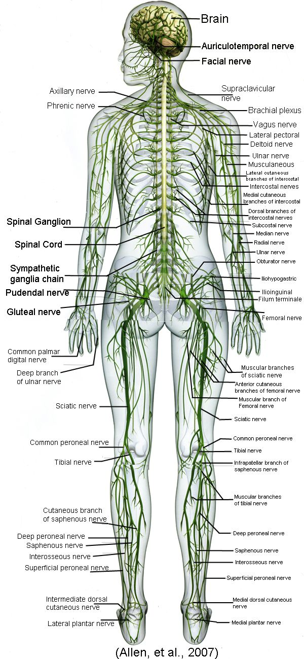 Body Nerves Ideas For Tattoos I Have Plannedd Might Get