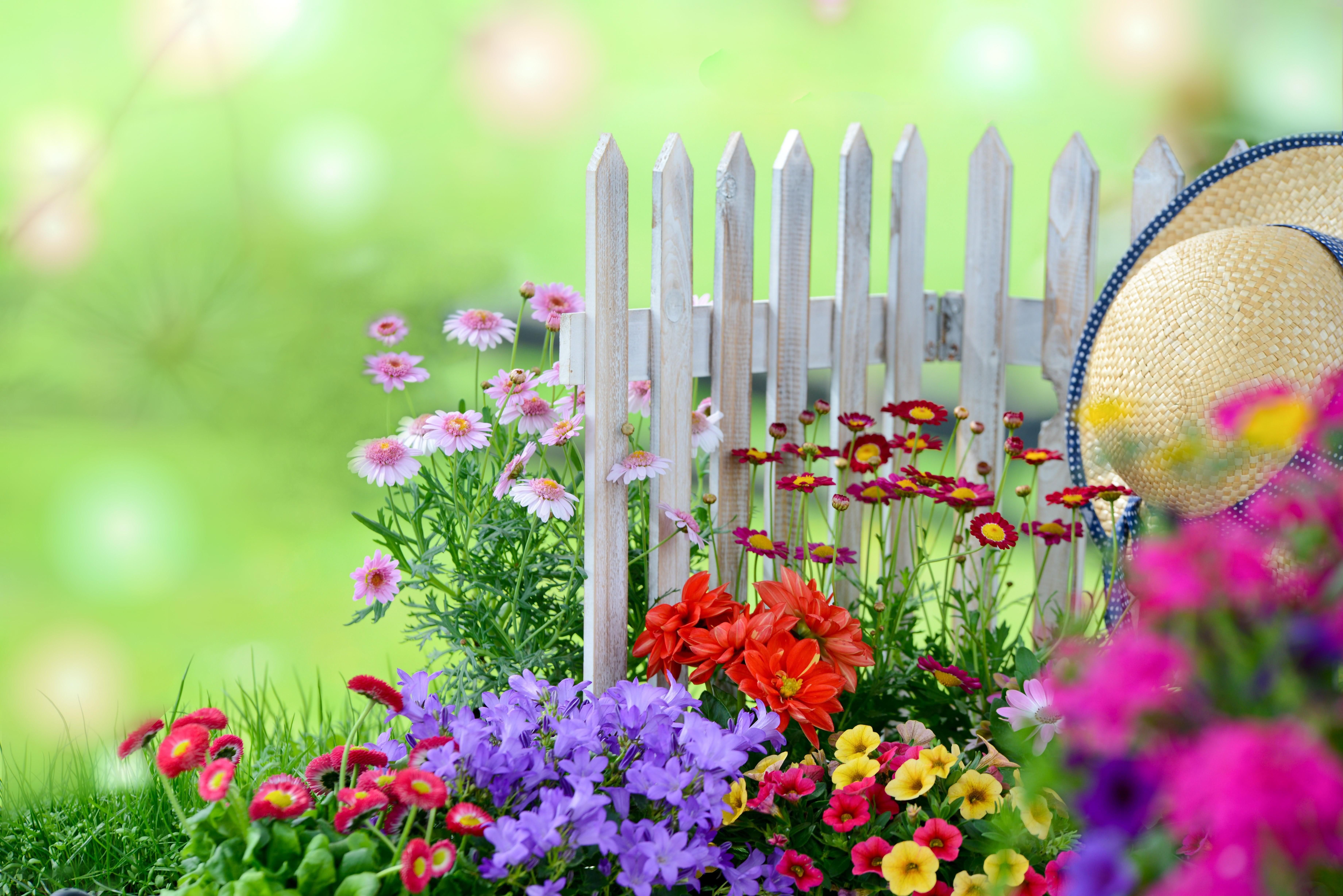 Herbstblumen Fur Einen Garten Voller Farben Blumen Und