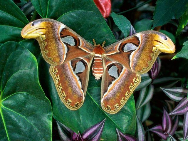 Pin Von Gabi Epple Auf Schmetterlinge Und Motten Schone Schmetterlinge Libellen Schmetterling