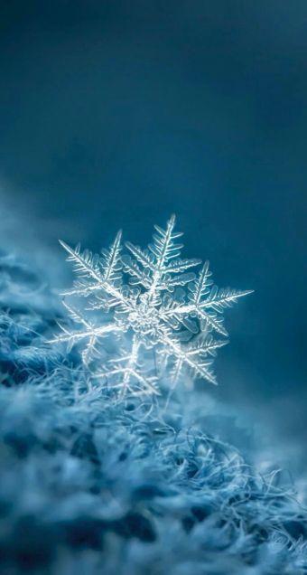 美しい雪の結晶の画像を下さい ガールズちゃんねる Girls Channel マクロ写真 雪景色 イラスト 冬の壁紙