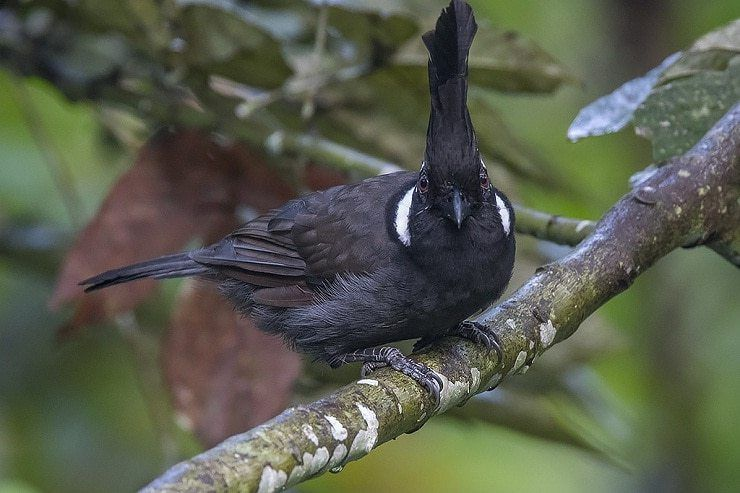 Cara Melatih Burung Cililin Makan Voer Dengan Mudah Dan Cepat Burung Makanan Burung Binatang