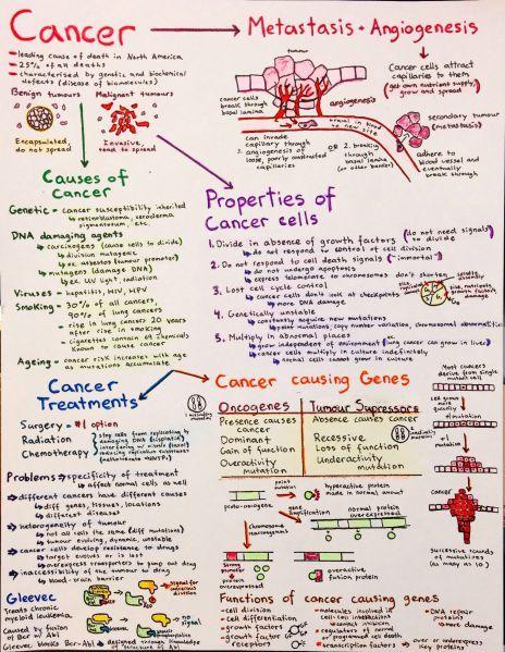 Cancer | biochemistry | Pinterest | Ap biology, School and