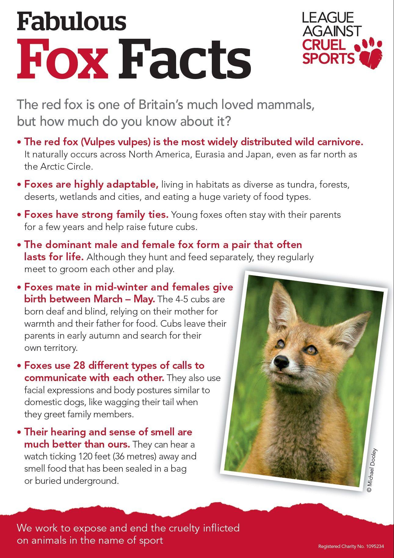 Some Fabulous Fox Facts For Foxy Feb League