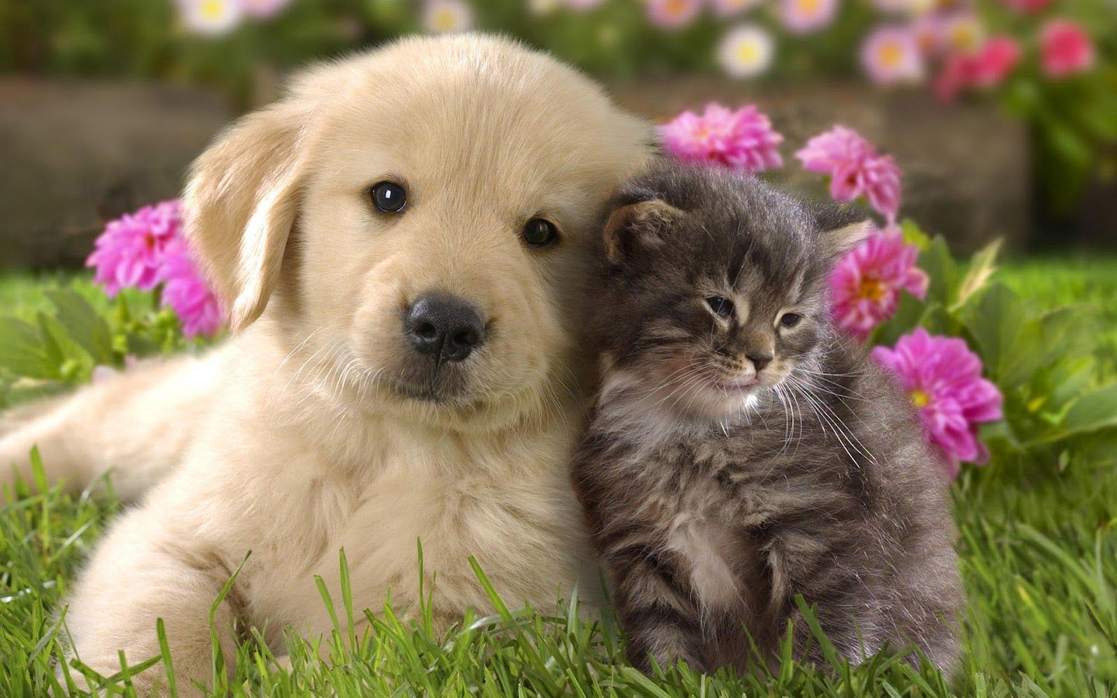 Animal Cute Cat And Dog Cuddling Cats Dogs Wallpaper