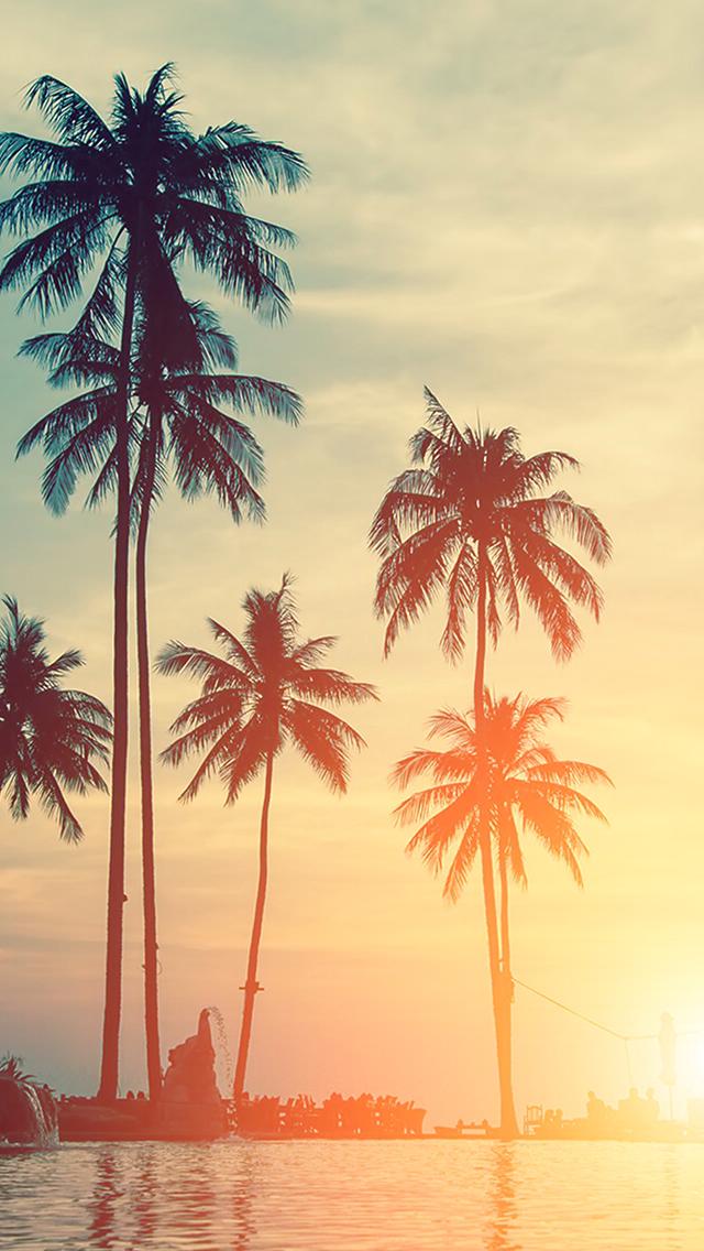 Картинки с пальмами на айфон, лиля добрым