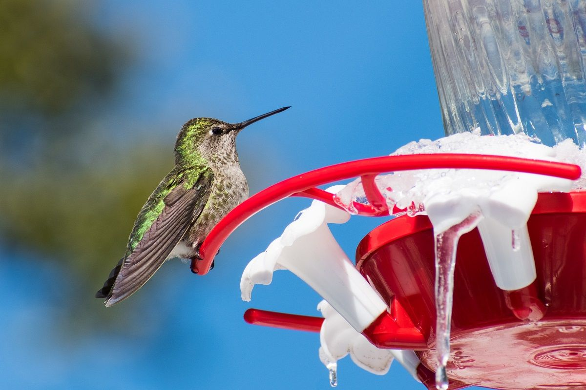 How to make sugar water for hummingbirds in 2020 sugar