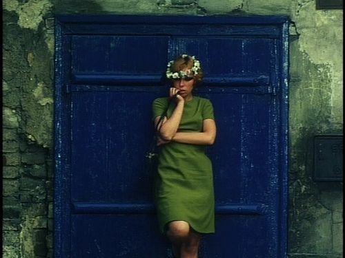 Daisies - 1966