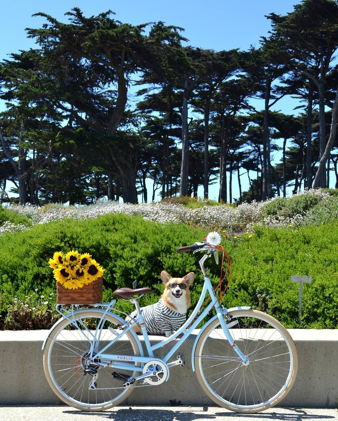 d62d77d5d5eb Summer chic for your bike and your puppy! RG  publicbikes