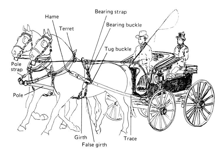 b>horse harness parts diagram</b> | Horse Tack | Horses, Horse ...