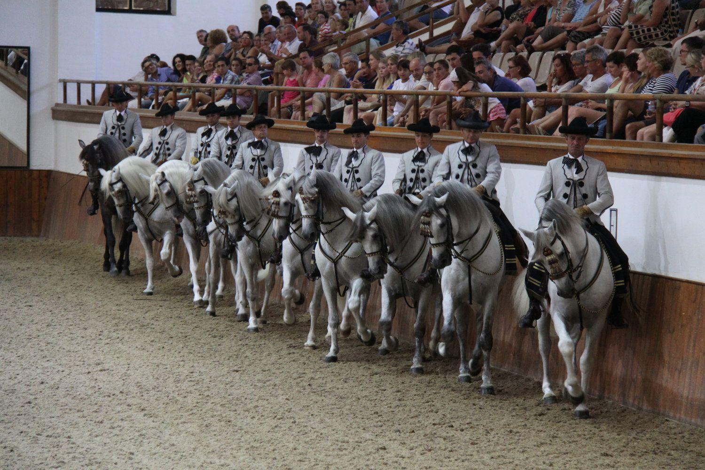 Fundacion Real Escuela Andaluza Del Arte Ecuestre Carrusel 004 Jpg Arte Ecuestre Caballos Pre Caballo Andaluz