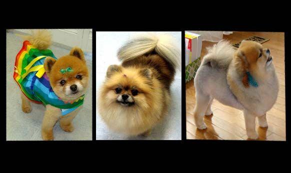 Pin On Ruff Cuts Dog Grooming Studio