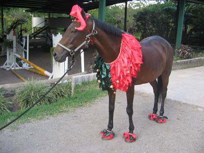 Horse Fancy Dress Ideas: Elf - Horse Fancy Dress Ideas: Elf Horses Horse Fancy Dress, Horse