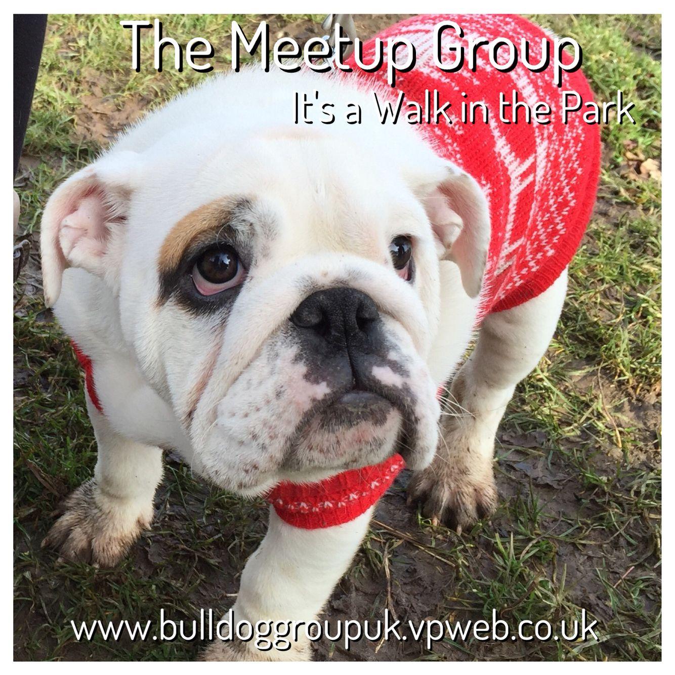 Meetup French bulldog, Animals, Dogs