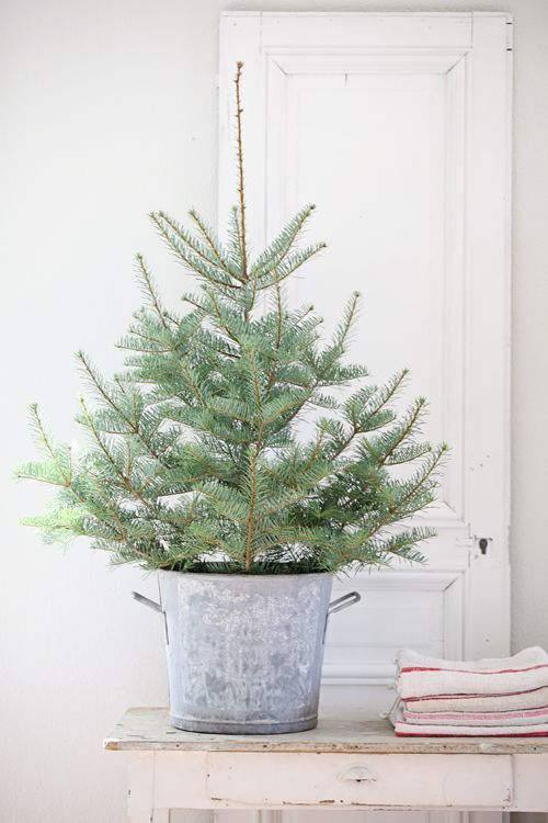 small Christmas tree in a bucket with no decor for a rustic space - how to decorate a small christmas tree