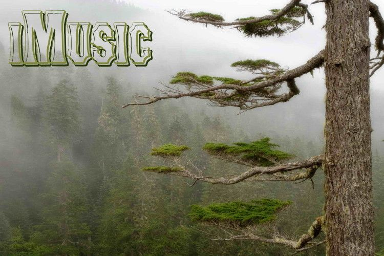 IMusic logo Tree forest, Foggy forest, Tree