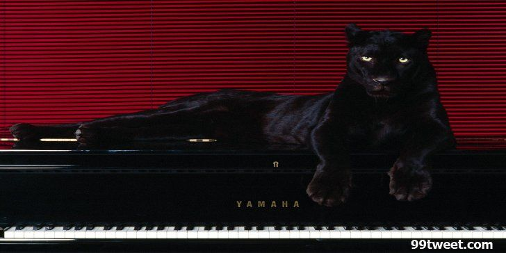 Black Leopard On Piano Twitter Header Twitter Headers Twitter Headers Abstract Funny Music Sport Quotes More Panther Black Panther Animals