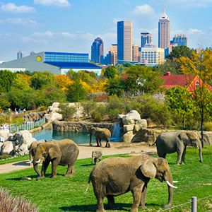 Top Attractions in Indianapolis | Back Home Again in Indiana ...