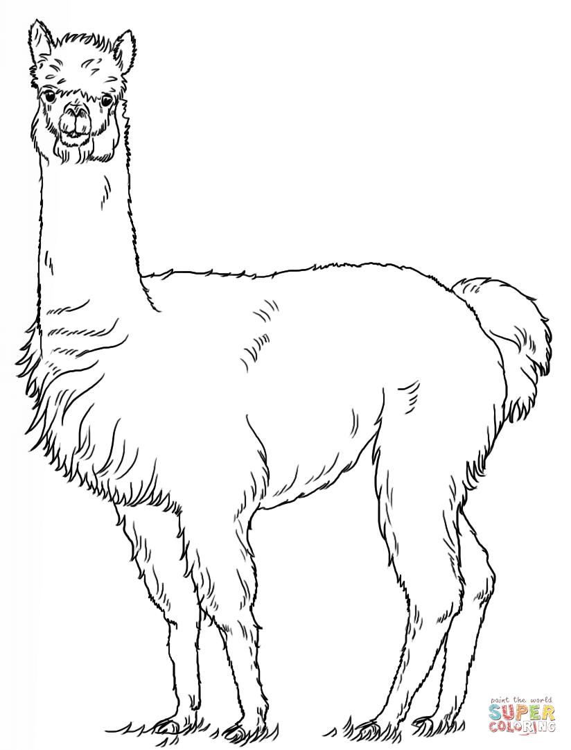Image result for alpaca drawing   Alpaca drawing, Llama ...