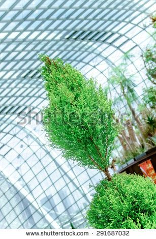 green tree in a glass greenhouse