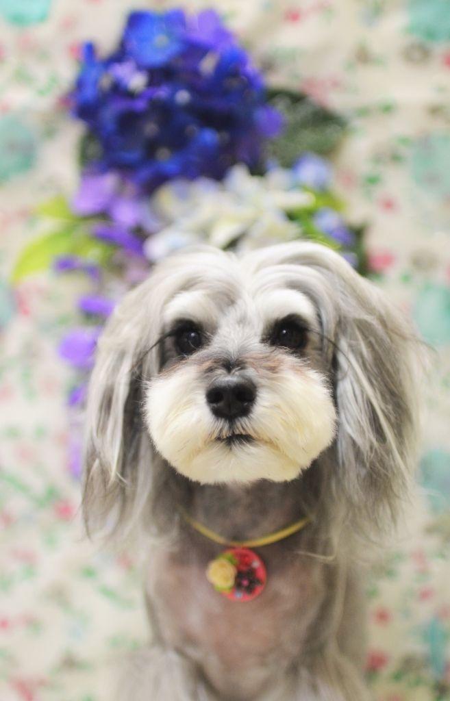 下北沢のドッググルーミングサロンbubbles バブルス のオフィシャルサイト 開放感のある清潔な店内で ワンちゃんにストレスを与えることなくくつろいでもらえる そのくつろいだ愛犬の姿を飼い主さんがガラス越しに見て笑顔になる そんな 気持ちよく 笑顔が