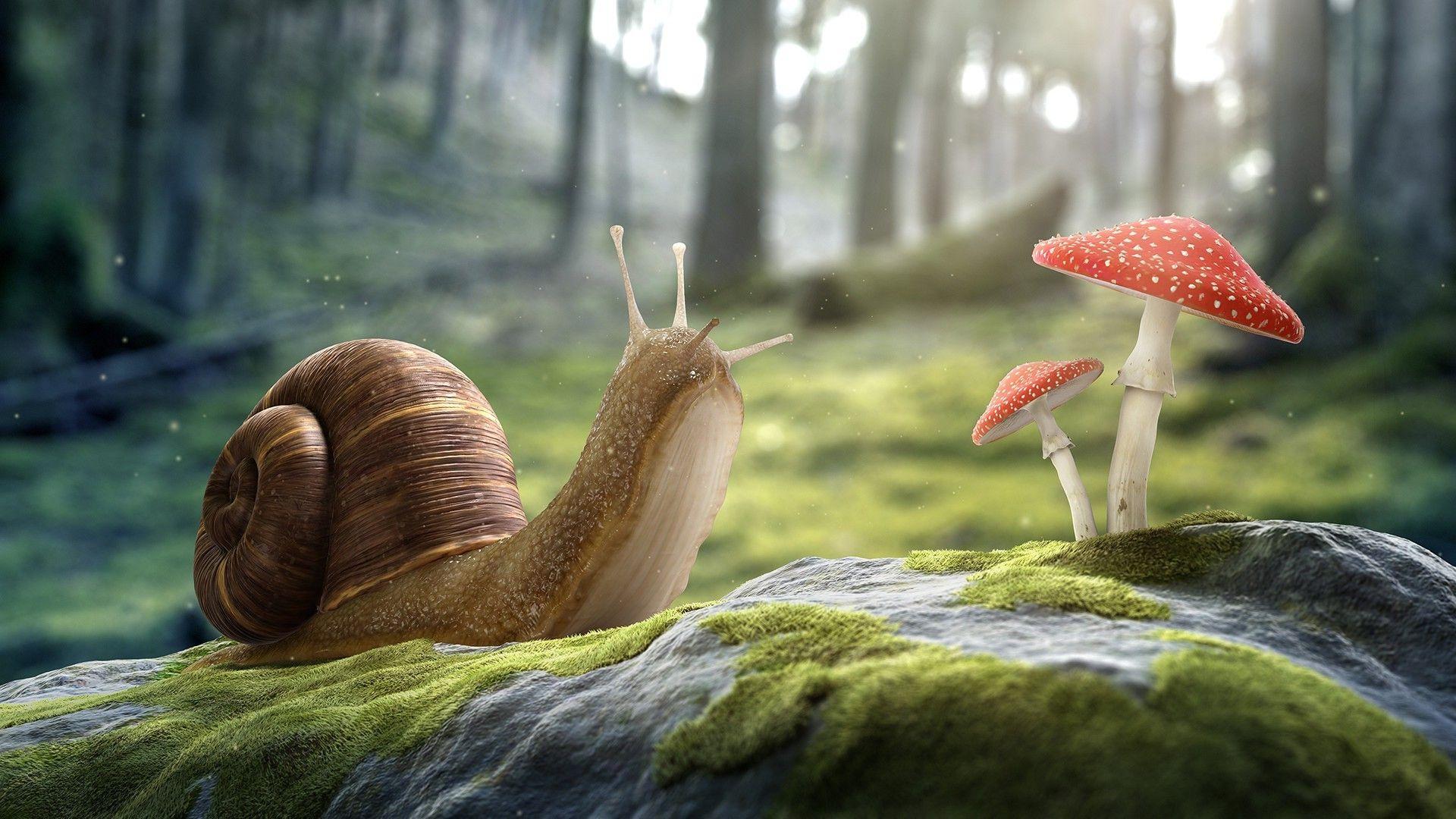 Digital Art Artwork Cgi 3d Nature Stones Snail Mushroom Trees Forest Macro Worms Eye View Depth Of Fi Worms Eye View Perspective Art Eyes Wallpaper