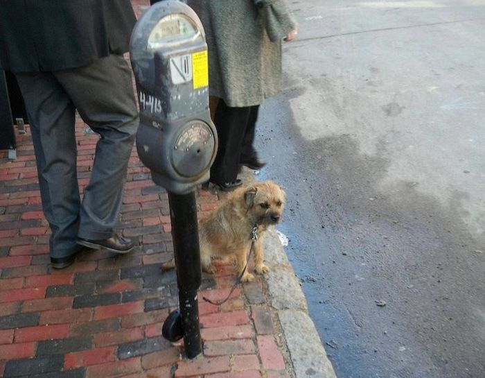 New Idea To Make Money From Dog Owners! http://techmash.co.uk/2014/08/07/new-idea-to-make-money-from-dog-owners/ #dogs #parkingmeter