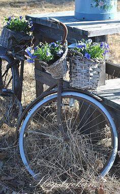 Pin by Zofia Katarzyna on Rowery i kwiaty | Ogród, Rower, Kwiaty